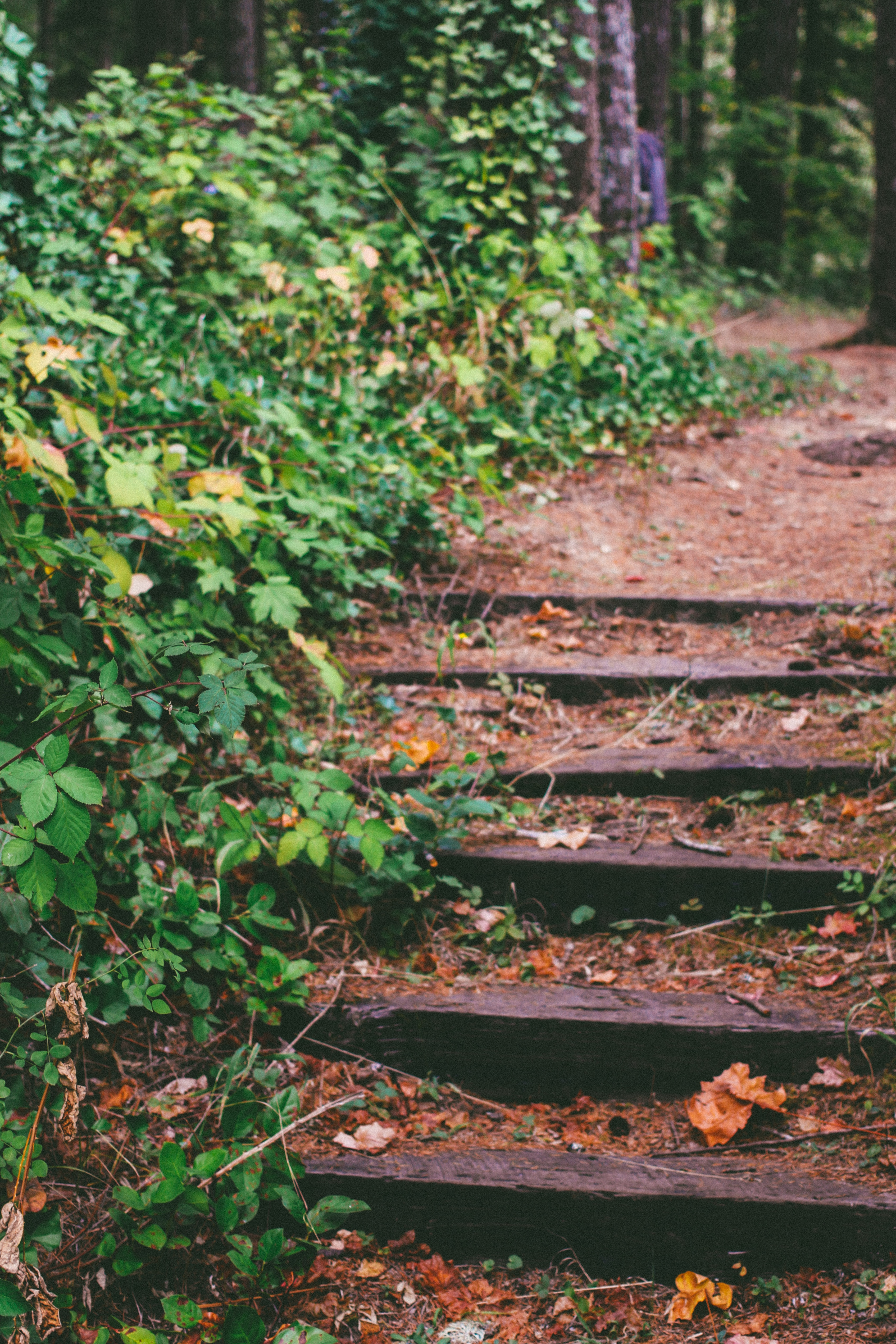 steps on a path